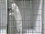 Hidden Camera Shows Cat Performing Amazing Jailbreak