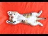 How To Train A Cat - HowToBasic
