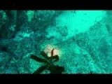 Huge Octopus Fights Diver For His Camera