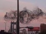Huge Putin Portrait Made Out Of Birds