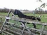 Horse Jumps Over Fence Fail