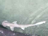 Hammerhead Sharks Part 2