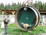 Hamster Wheel For Dogs? Wtf