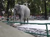 Help Save Mali The Elephant
