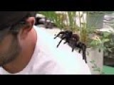 Hipster 'Tards Allow Themselves To Be Bitten By Savage Columbian Turantula NOT REALLY GRAPHIC, JUST RIDICULOUS