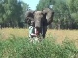 How To Stop A Charging Bull Elephant