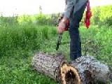 Hollow Log Tresure Chest