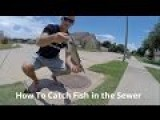 How To Catch Fish In The Sewer