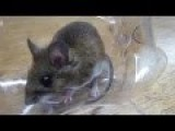 How To Make A Simple MOUSETRAP