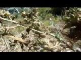 Himalayan Crystal Hashish Charas