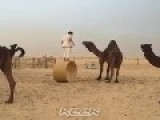 How Not To Get On A Camel
