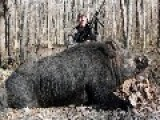 Hunter Takes 500lb Wild Boar