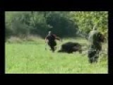 Hunting Wild Boars At Close Range