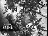 Handkerchief Drill Trailer 1949