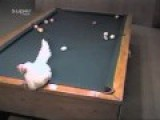 How Does Chicken Play Billiards?