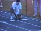 How To Win A Race, This Dog Got It
