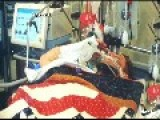 Hospitalized Soldier, Thought To Be Unconscious, Surprises With Salute