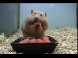 Hamster - WTF
