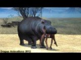 Hippo Swallowed A Native Woman CDI