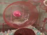 Hamster Wheel Fail