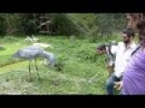 How To Greet A Shoebill