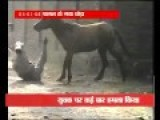 Horse Goes On Rampage, Attacks Man
