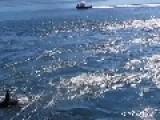 Huge Pod Of Orcas Off Galiano Island, BC Canada