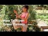 How To Ripen A Green Tomato Off The Vine