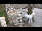ISIS Hunting With Goat Decoy !