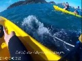 Injured Whale Approaches Kayakers For Help