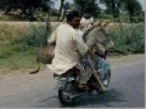 India: Donkeys Given Awards In Bangalore