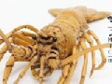 Incredible Art Work---The Spiny Lobster