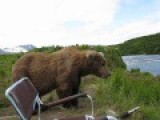 Incredible Up-Close Encounter With Alaskan Brown Bear
