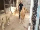 Iraqi Soldier Best Freind With Lioness