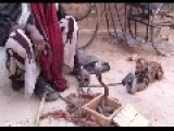 INDIA == MONKEY Points A GUN At A COBRA While Other MONKEY TWERKS To GHETTO MUSIC