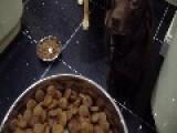 Just 34 Seconds Of Doggie Food Etiquette