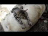 Just A Dog And Cat Sleeping Together