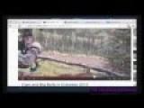 Joe Rogan Watches The Internet #4