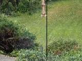Jerk Greases The Rod So Squirrel Can't Get At The Food