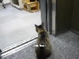 Japanese Cat Rides The Elevator Home