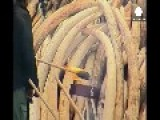 Kenya Burns Huge Ivory Stockpile Calling For Ban On Trade