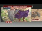 Krishna River Fishermen Face Peculiar Problem With Weird Fish Types | ABN Telugu 25-07-2016