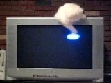 Kitty Chases Screensaver