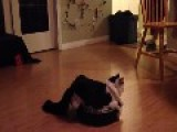Kitty Rides Robotic Hoover Around Living Room