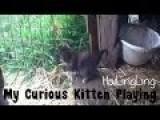 Killer Kitten On The Loose!