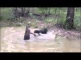 Kangaroo Vs Dog Fight FULL Attack