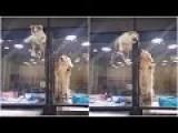 Kitten Makes A Break For It