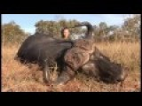 Kendall Jones Cape Buffalo Kill First Big 5 In Africa