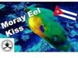 Kissed By A Moray Eel, Punto Perdiz, Cuba