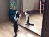 Kitten Sees Reflection In Mirror And Tries To Attack It